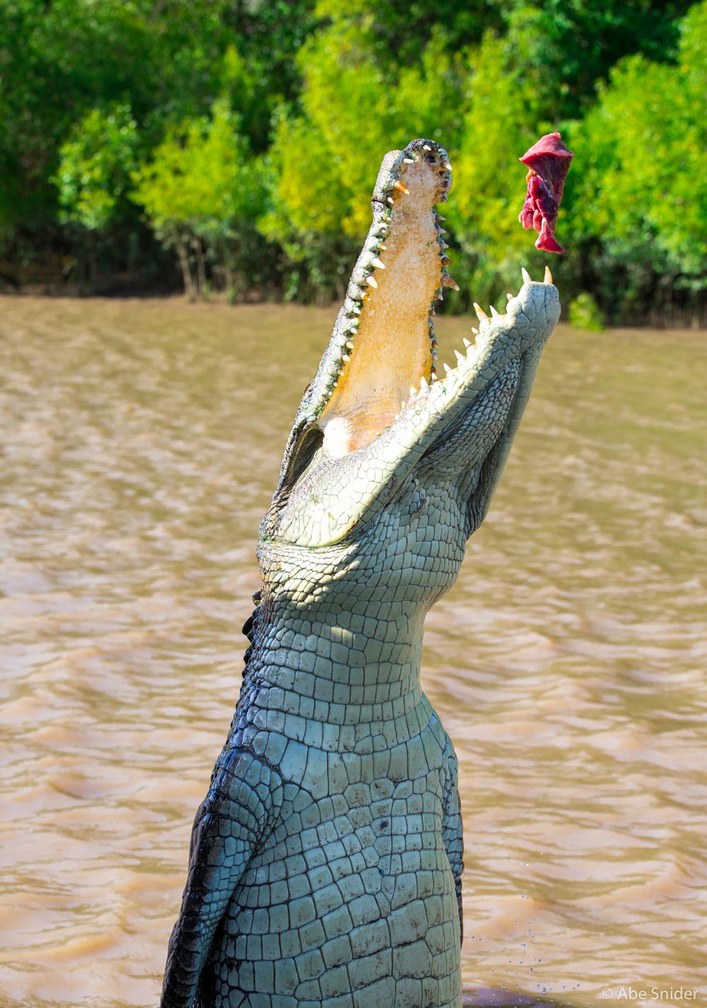 Dad croc