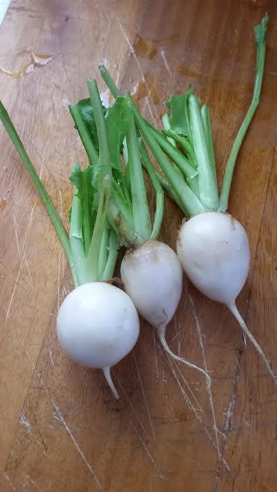 Hakuri Turnips