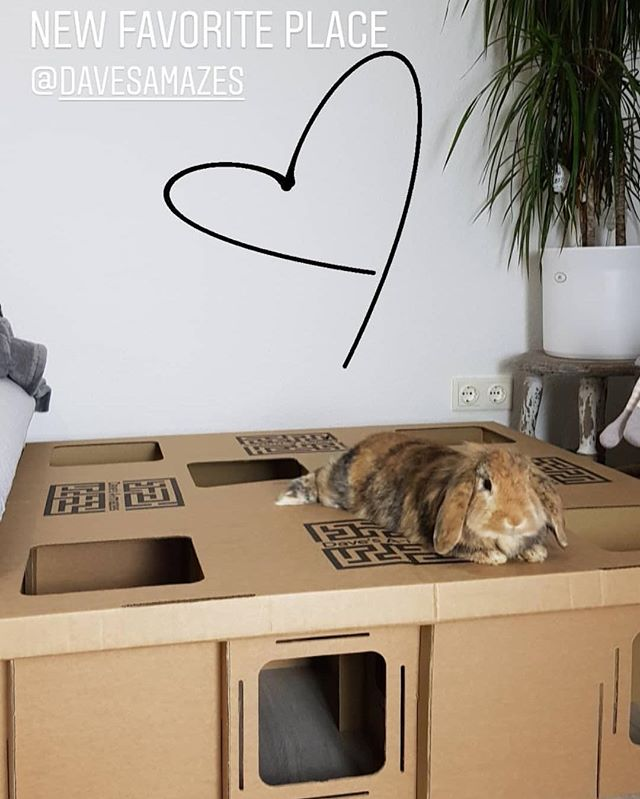 Weekends are for chilling on/in/beside your maze 💜🐰 • •  Many thanks to the wonderful @imschuh for the fab picture 🎉🙌🏼 #maze #cardboard #fun #chilling #relaxing #play #exciting #adventure #exploring #rabbittoys #rabbitfun