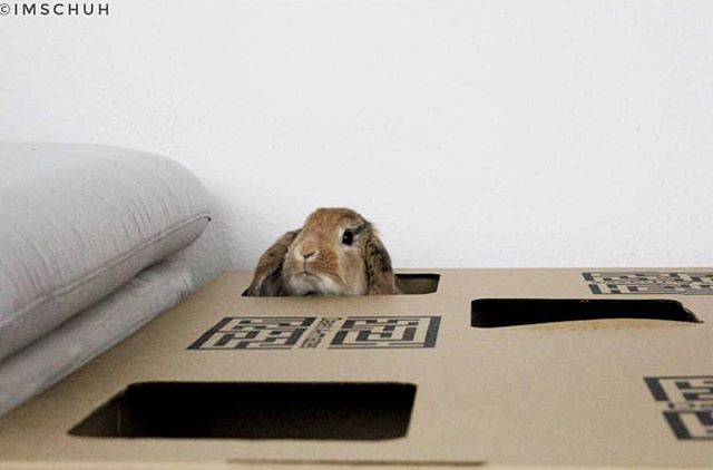 Oh no! It's Monday again! 🙈🙈 To ease your Monday blues why not visit our website www.davesa-mazes.com 🎉🙌🏼 Thank you to the wonderful @imschuh for the fab photo 💜🐰 #houserabbit #housebunny #houserabbitsofinsta #houserabbitsworldwide #maze #cardboard #toy #fun #adventure #love #cute #photo