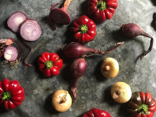The last of the sweetest sweet peppers (and onions) today @thefarmbeyond #thefarmbeyond #northfork #organic #farm #newyork