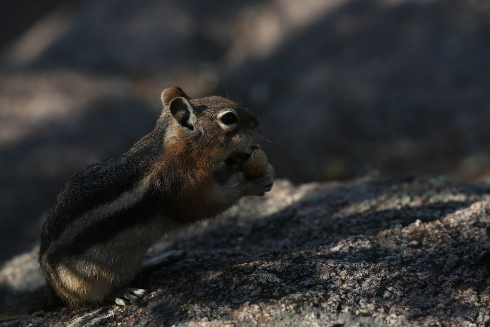 Feed the chipmunks at the top of Prospect Mountain (peanuts for sale in the snack shop; photo credit: Jess Bogener)