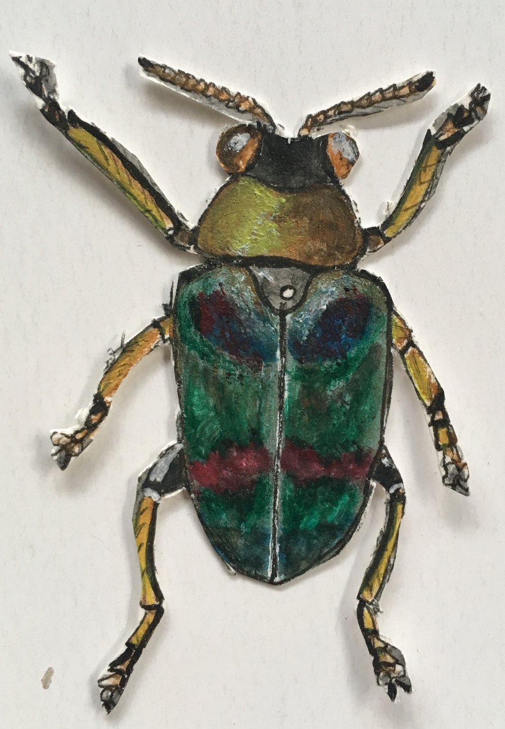 green and yellow bug cut out.jpg