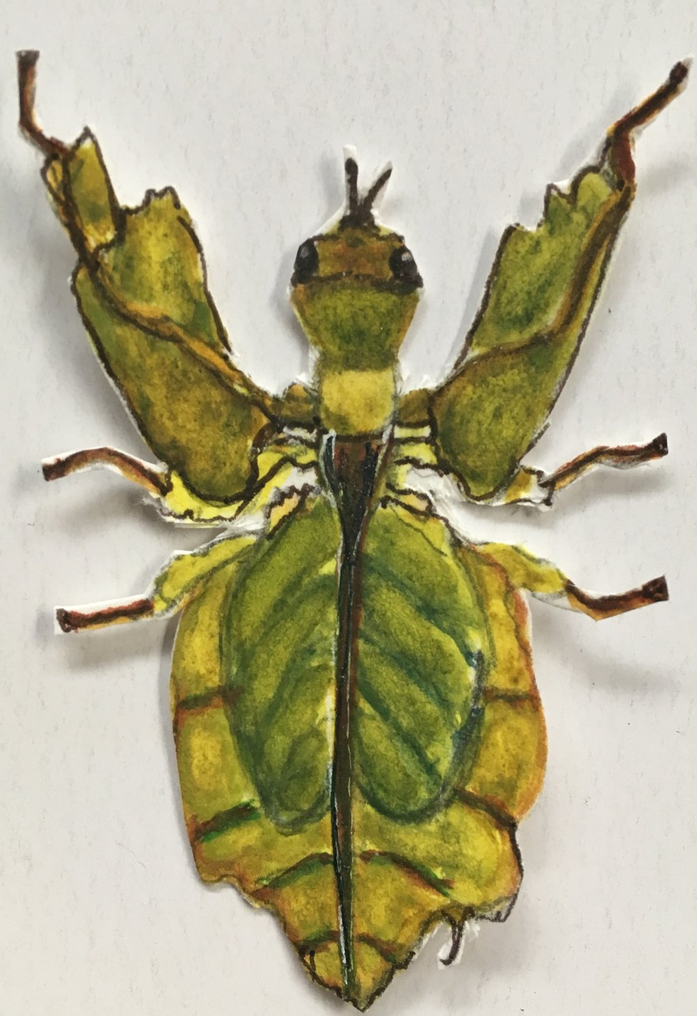 leaf bug cut out.jpg