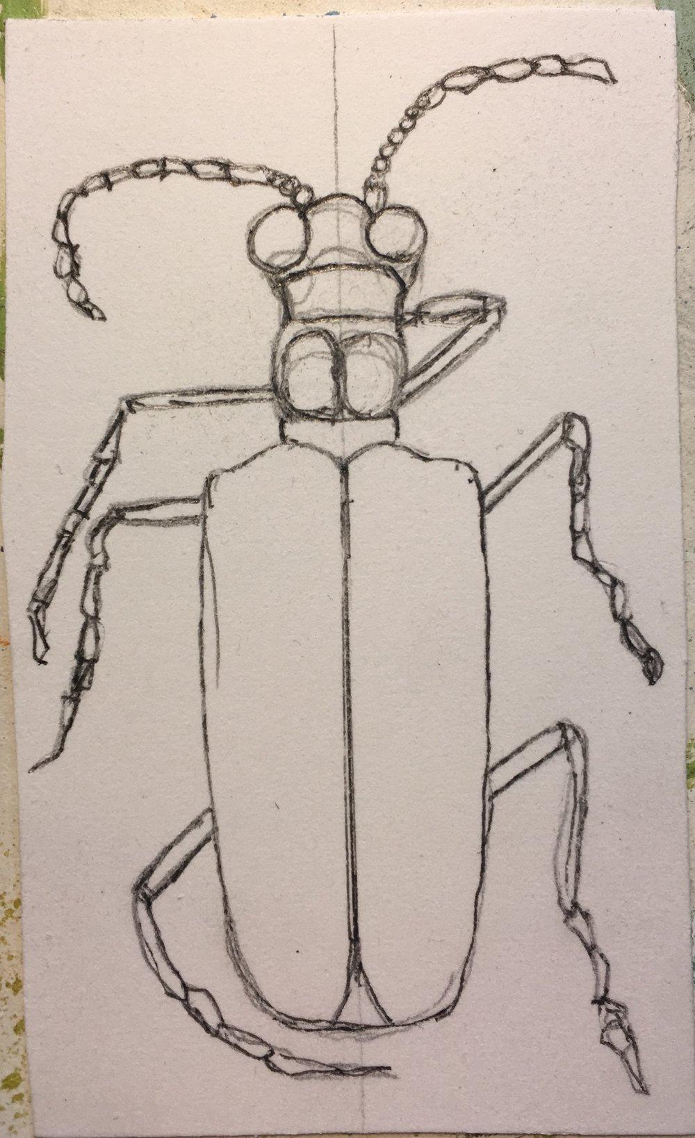 bug sketch.jpg