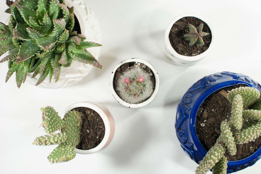 the-four-design-andrea-luna-reece-ceramics-flat-setup-6.jpg