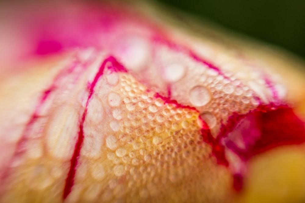 tulip-festival-2015-51.jpg