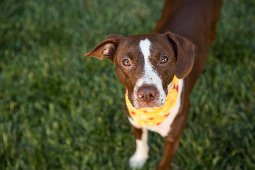 Russell Pups-3-2.jpg