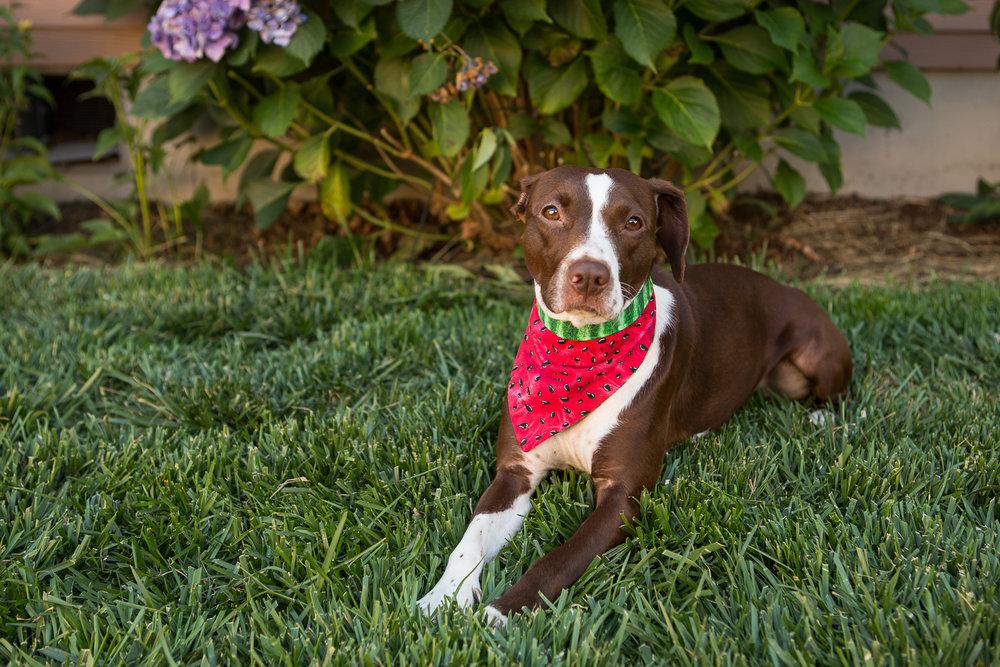 Russell Pups-10-2.jpg