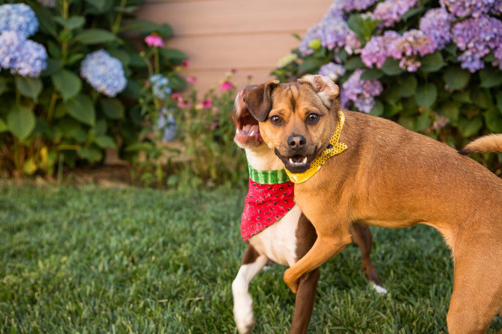 Russell Pups-13-2.jpg