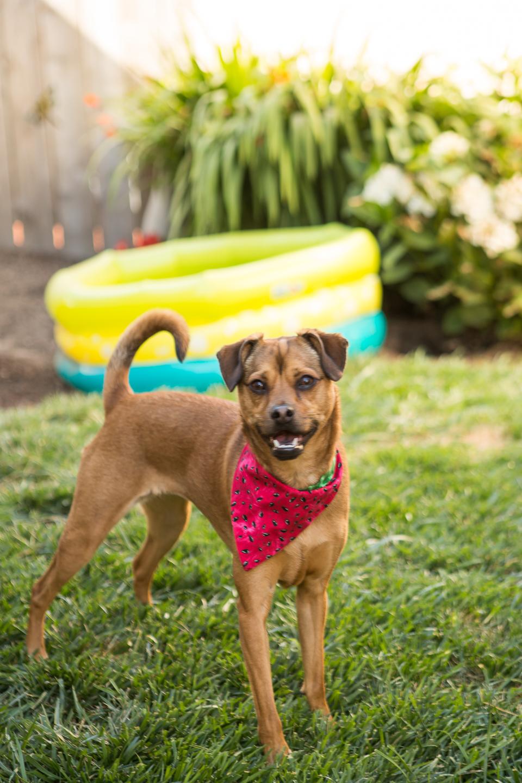 Russell Pups-15-2.jpg