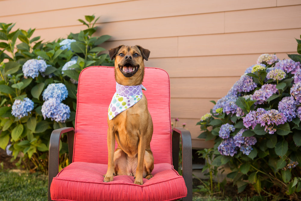 Russell Pups-40-2.jpg