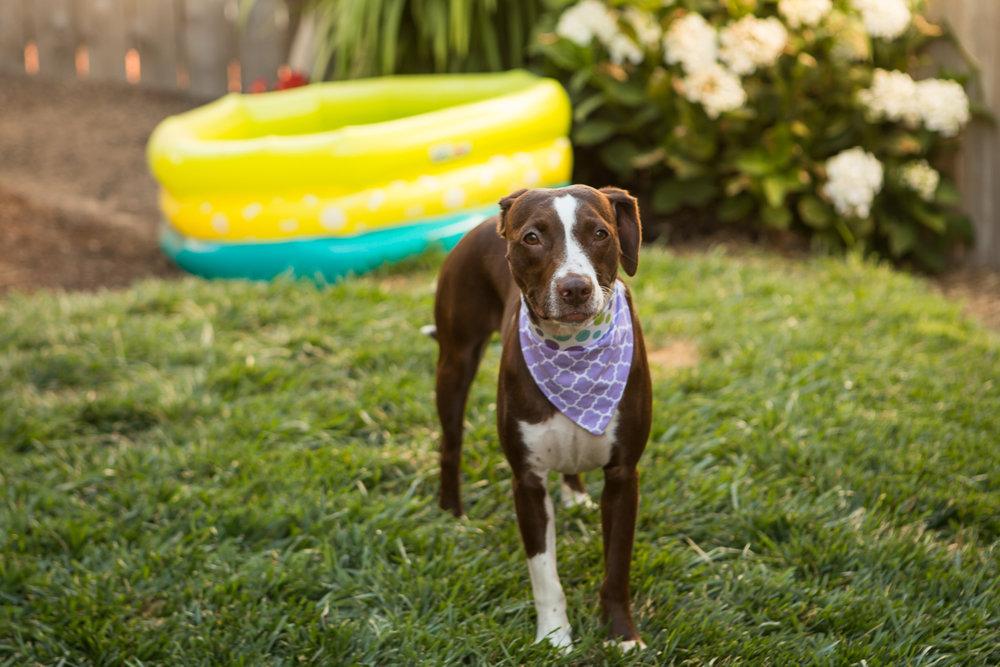Russell Pups-47-2.jpg