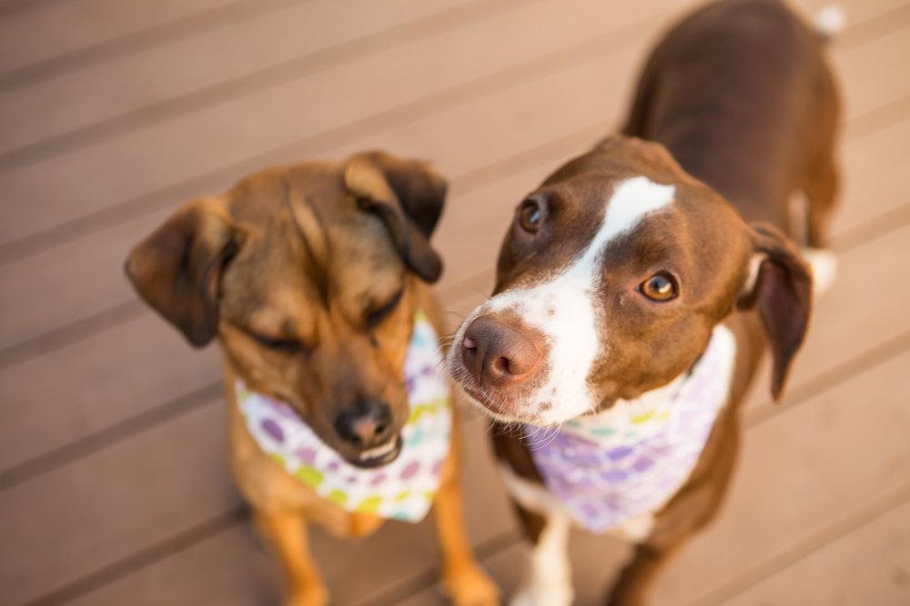 Russell+Pups-33-2.jpg