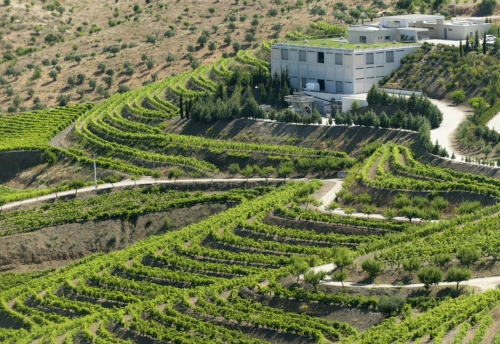 Quinta da Leda_Douro (73).jpg