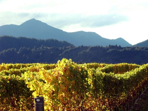 Photo is taken from the Antipode Estate Vineyard, one of the vineyards The Darling sources their grapes from