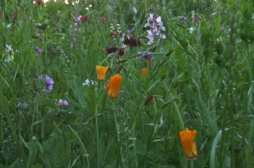 Wildflowers Near St. Michaels
