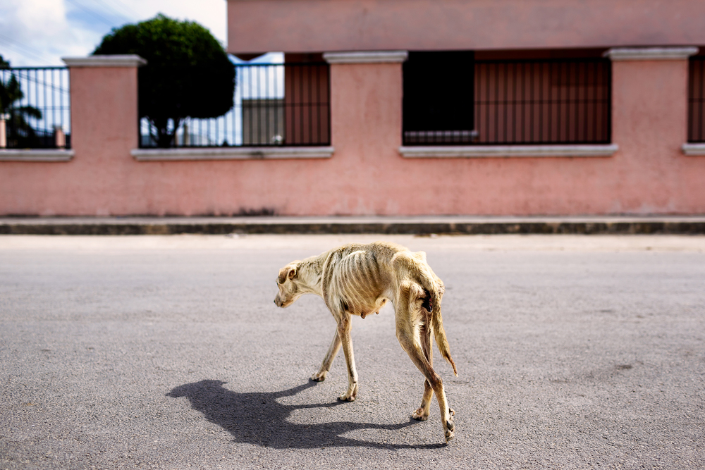 Luna, photographed in Bonfil, Mexico for CANDi International   Read Luna's amazing success story here