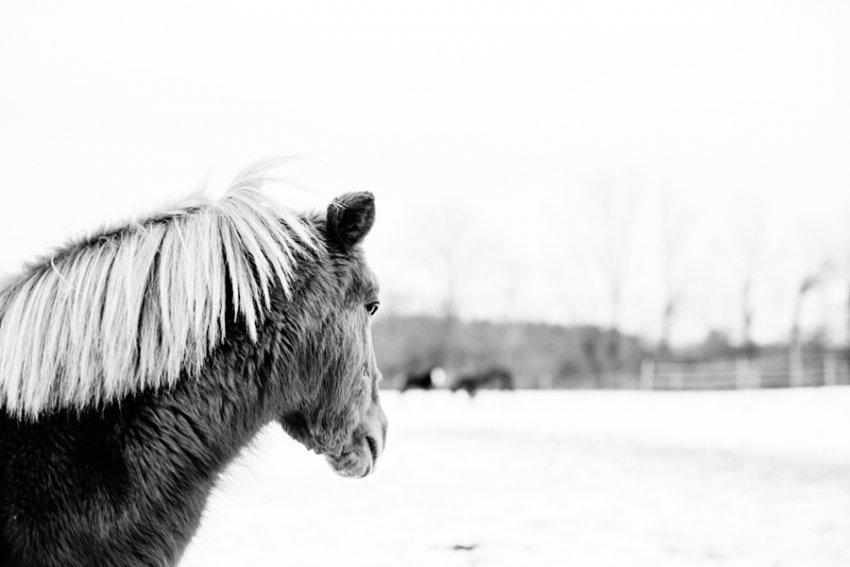 Horse-Photography-Saratoga-Springs-NY12.jpg