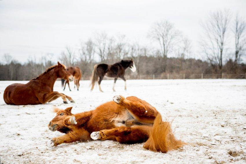 Horse-Photography-Saratoga-Springs-NY15.jpg