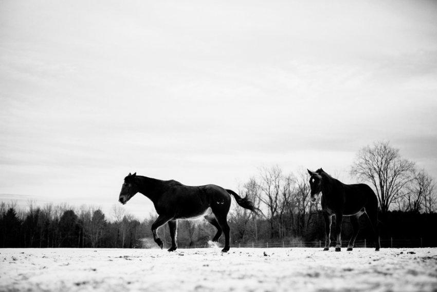 Horse-Photography-Saratoga-Springs-NY18.jpg