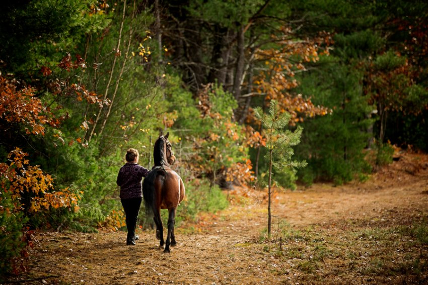 Saratoga-Equine-Photographer20.jpg
