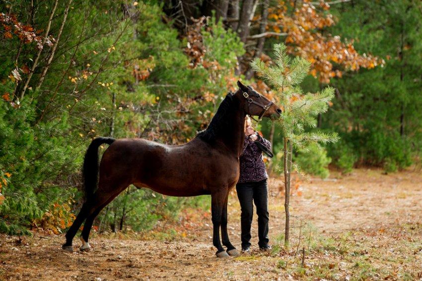Saratoga-Equine-Photographer27.jpg