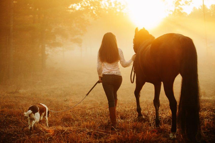 Equine-photographer-saratoga-ny18.jpg