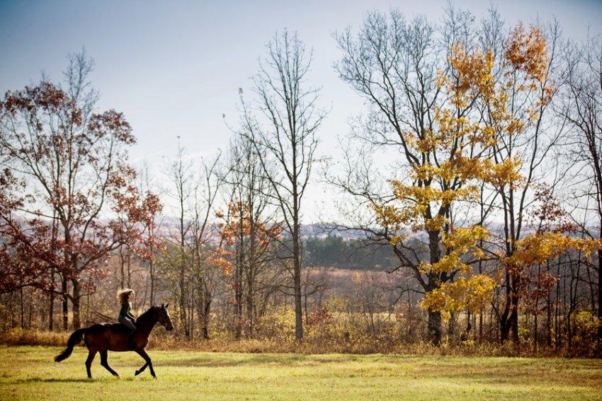Equine-photographer-saratoga-ny03.jpg