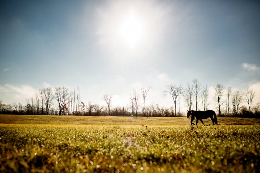 Equine-photographer-saratoga-ny05.jpg