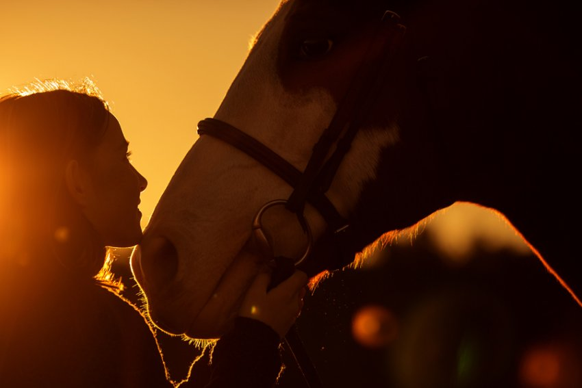 Equine-photographer-saratoga-ny37.jpg