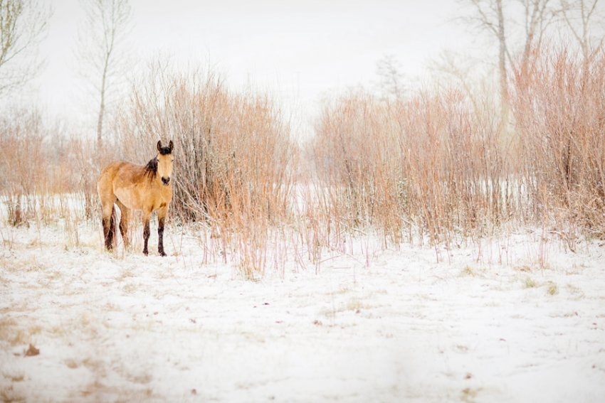tracey-buyce-horse-photography17.jpg