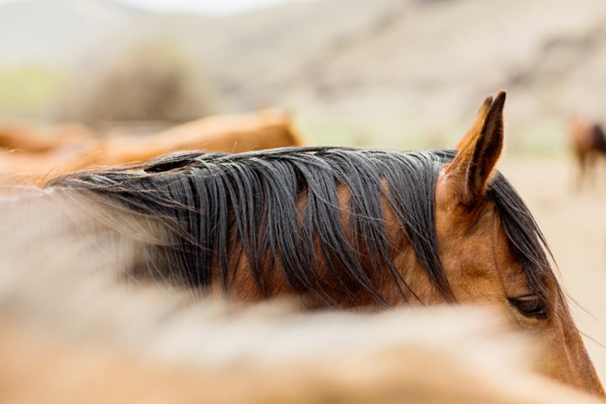 tracey-buyce-horse-photography28.jpg