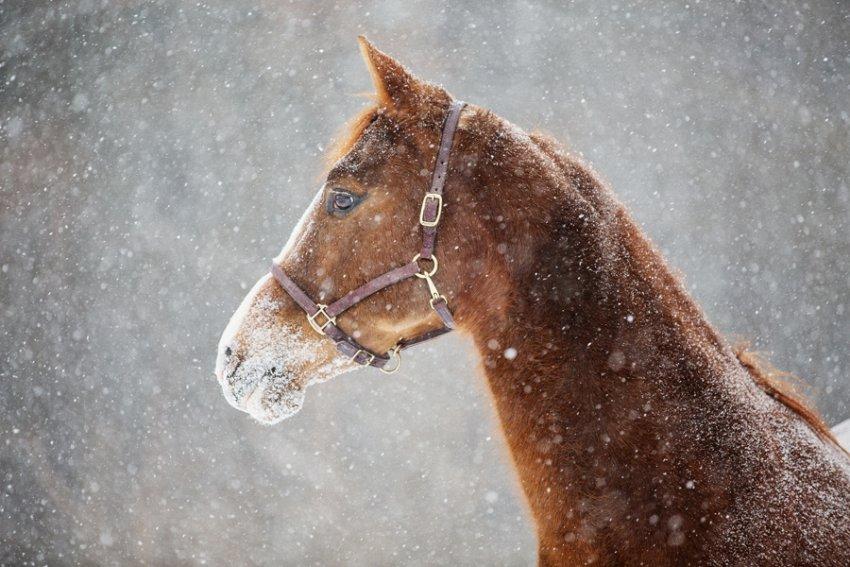 Tracey-Buyce-Photography-horse-photos14.jpg