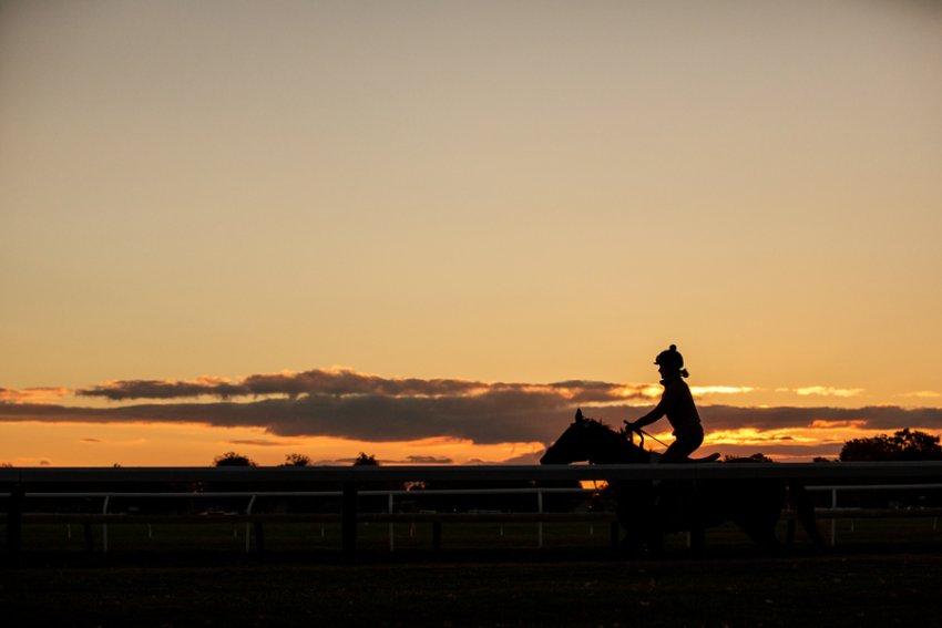 Tracey-Buyce-Photography-horse-photos15.jpg
