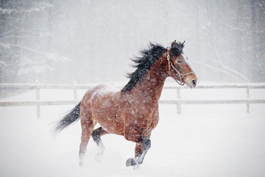 Tracey-Buyce-equine-photographer007.jpg