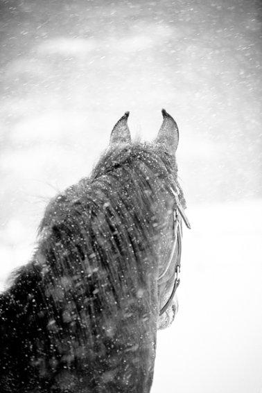 Tracey-Buyce-equine-photographer013.jpg