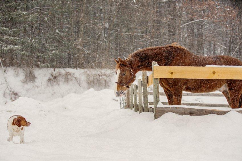Tracey-Buyce-equine-photographer014.jpg