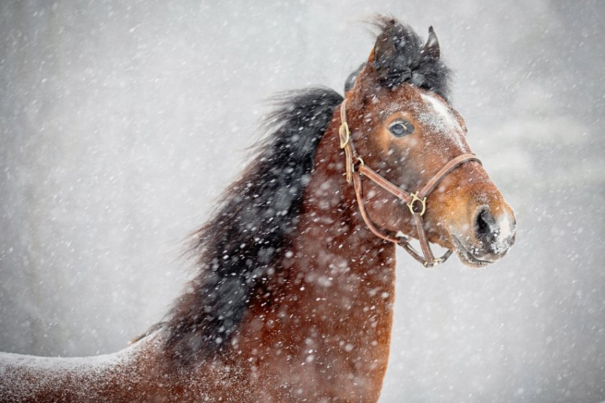 Tracey-Buyce-equine-photographer016.jpg