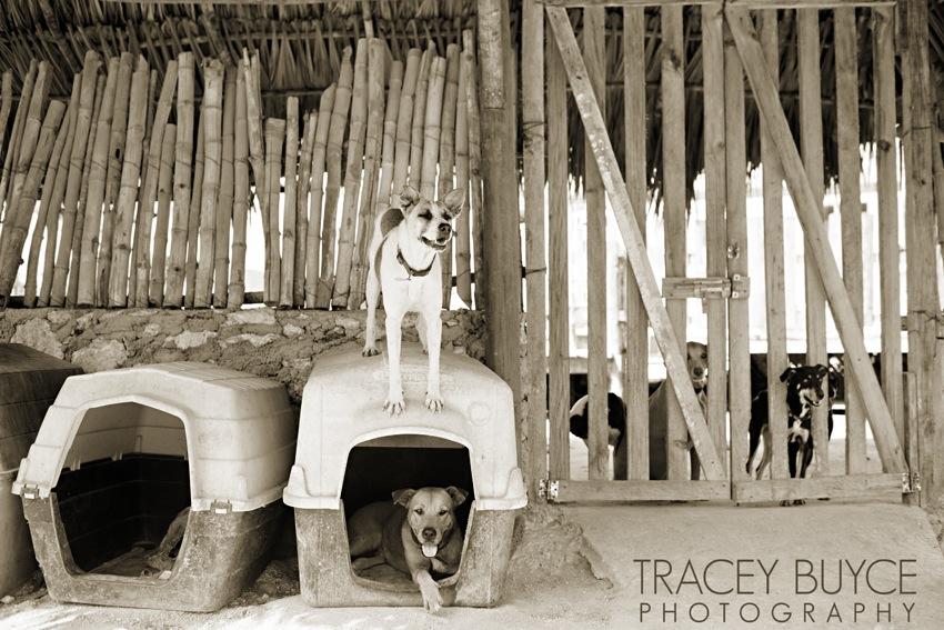 saratoga-springs-ny-dog-photographer80.jpg