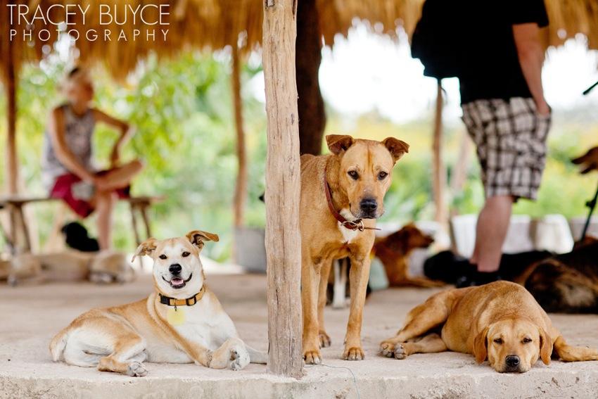 saratoga-springs-ny-dog-photographer89.jpg