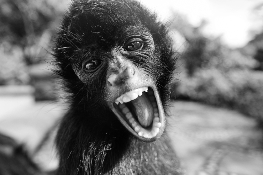 tracey-buyce-animal-photographer-monkeys-bolivia141.jpg