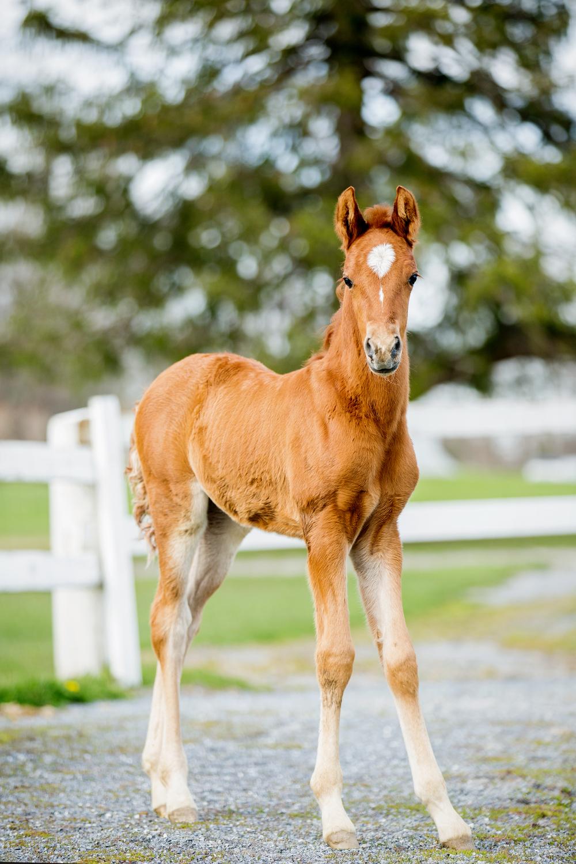 Fine Art Horse Photography08.jpg