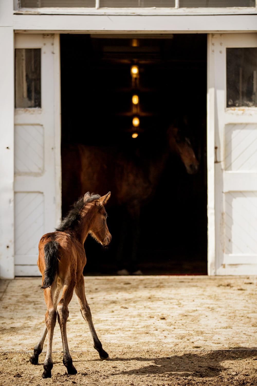 Fine Art Horse Photography17.jpg