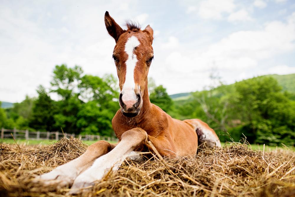 Fine Art Horse Photography22.jpg