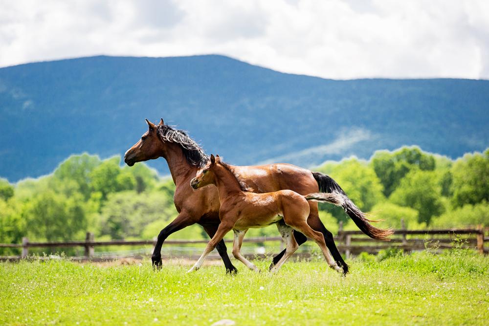 Fine Art Horse Photography25.jpg