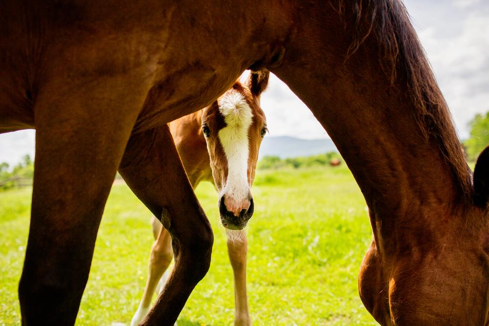 Fine Art Horse Photography29.jpg
