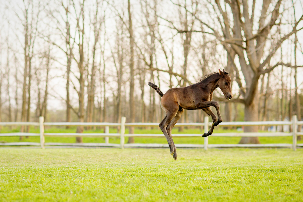 Equine Photography Saratoga Springs NY01.jpg