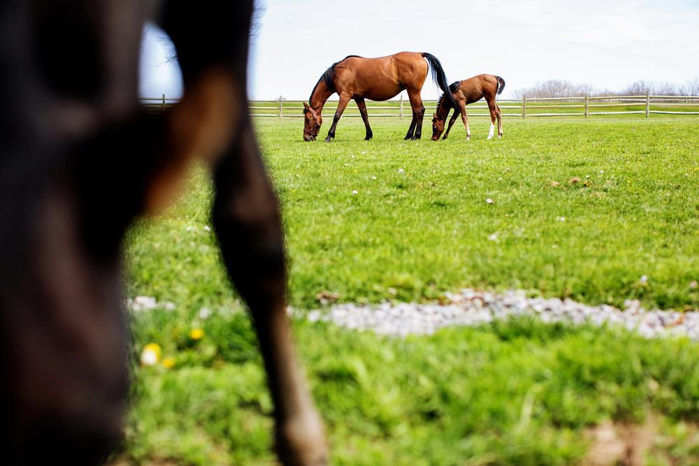 Equine Photography Saratoga Springs NY05.jpg