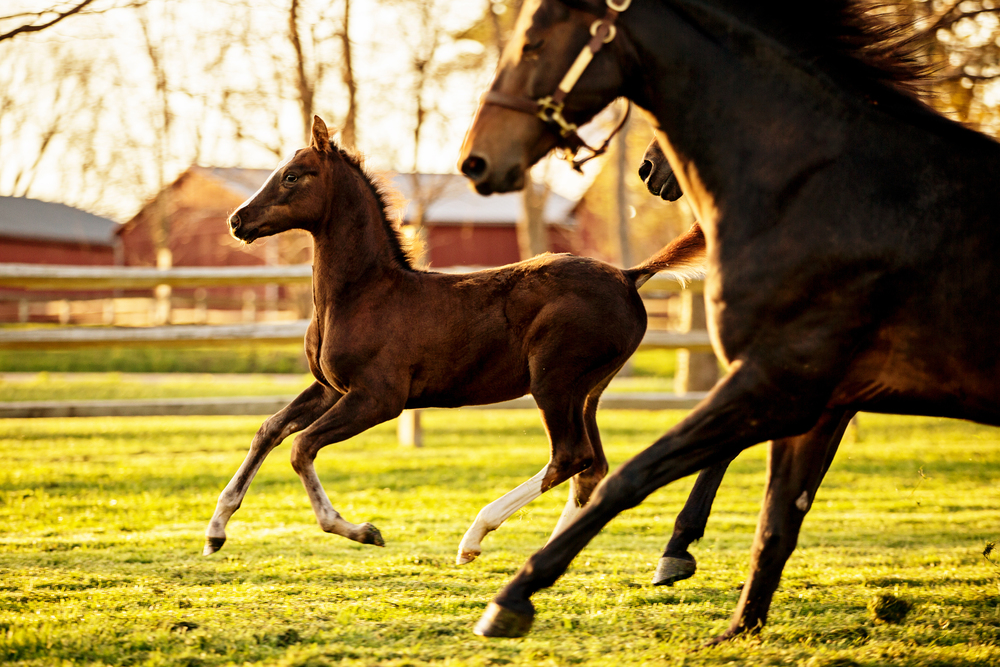 Equine Photography Saratoga Springs NY07.jpg